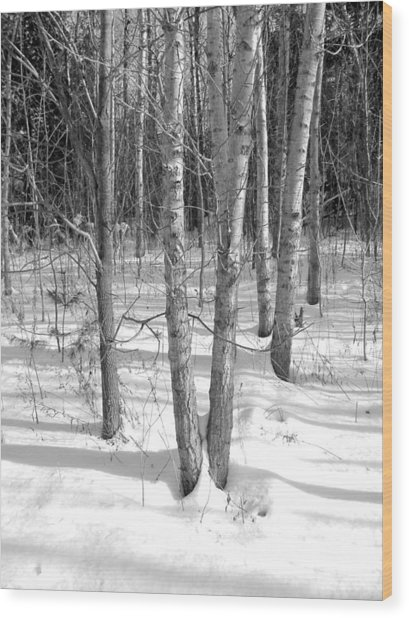 Birch Trees Wood Print by Douglas Pike