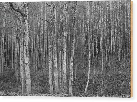Birch Tress Wood Print