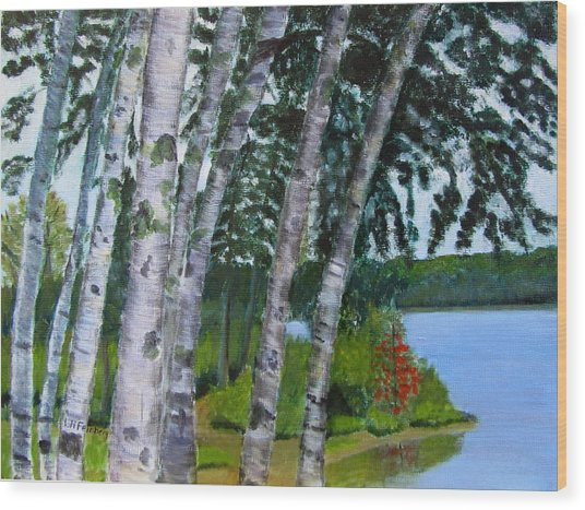Birches At First Connecticut Lake Wood Print