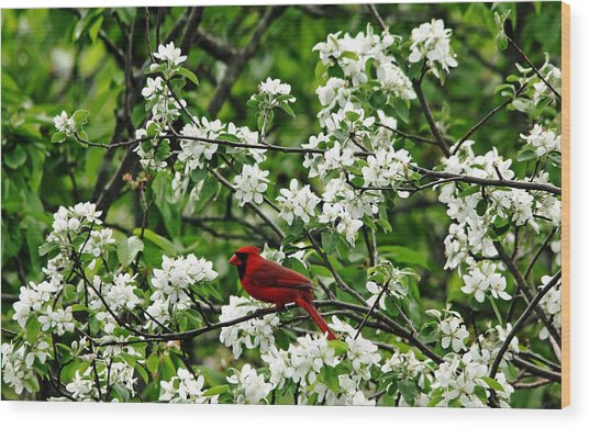 Bird And Blossoms Wood Print