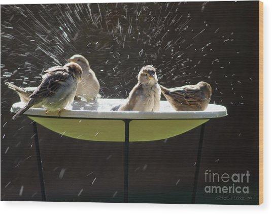 Bird Bathing Spree Wood Print by Gordon Wood
