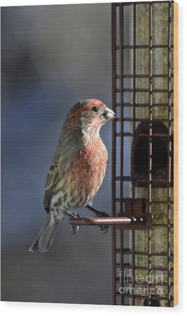 Bird Feeding In The Afternoon Sun Wood Print