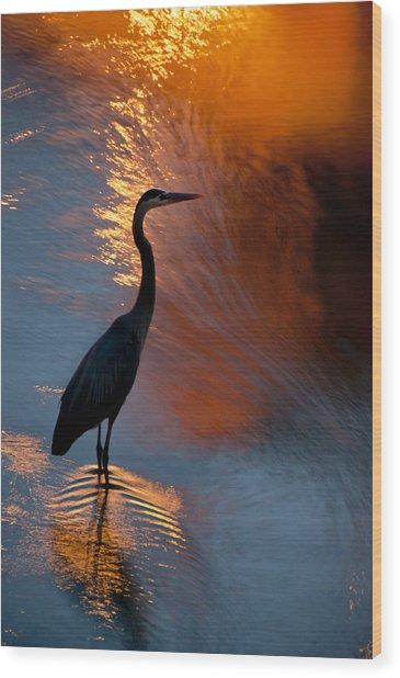 Bird Fishing At Sundown Wood Print by Williams-Cairns Photography LLC