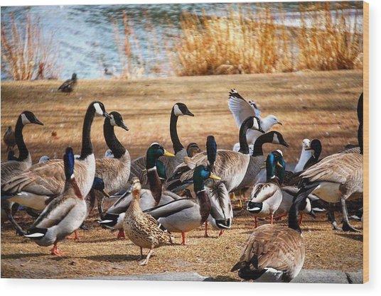 Bird Gang Wars Wood Print