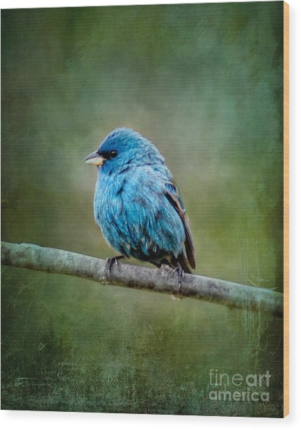 Bird In Blue Indigo Bunting Ginkelmier Inspired Wood Print
