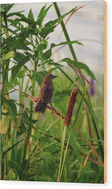 Bird In Cattails Wood Print