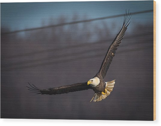Bird In Flight  Wood Print