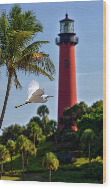 Bird In Flight Under Jupiter Lighthouse, Florida Wood Print