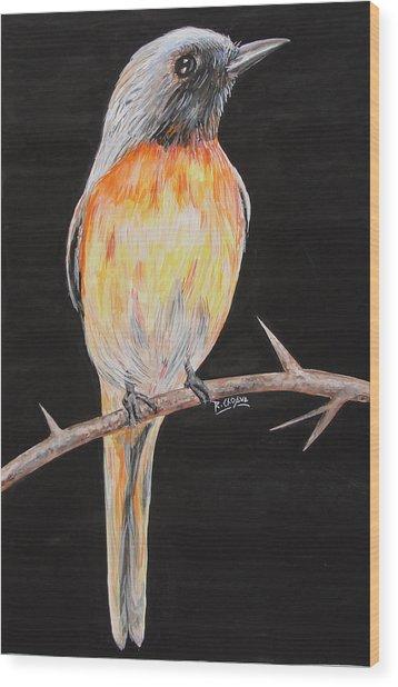 Bird Minivet Wood Print by Rajesh Chopra