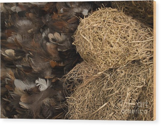 Bird Nest And Feathers Wood Print