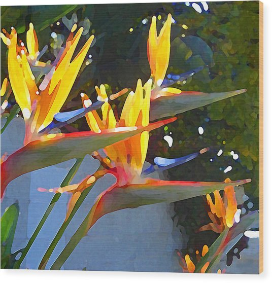 Bird Of Paradise Backlit By Sun Wood Print