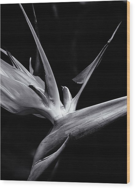 Bird Of Paradise Wood Print