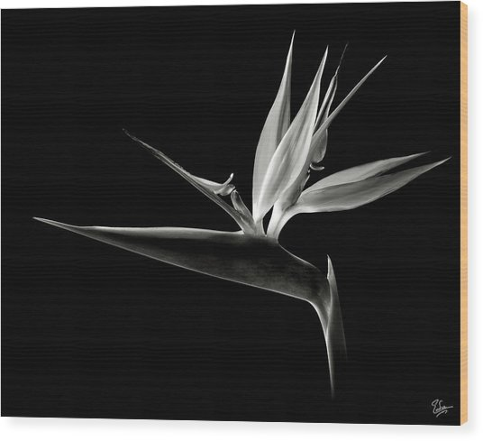 Bird Of Paradise In Black And White Wood Print