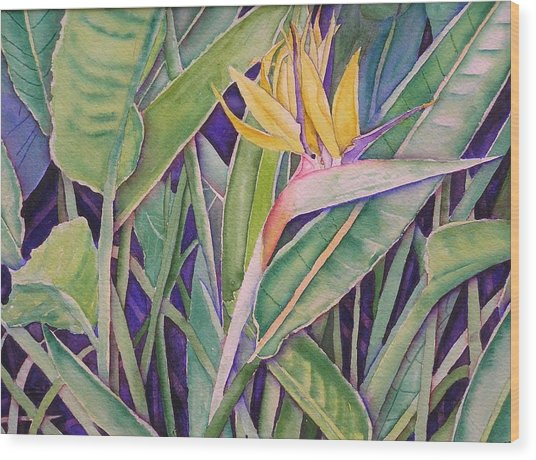 Bird Of Paradise Wood Print by Laurie Balla