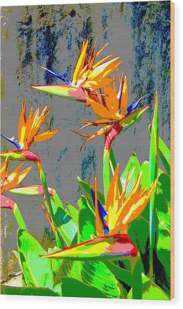 Bird Of Paradise Wood Print by Scott K Wimer