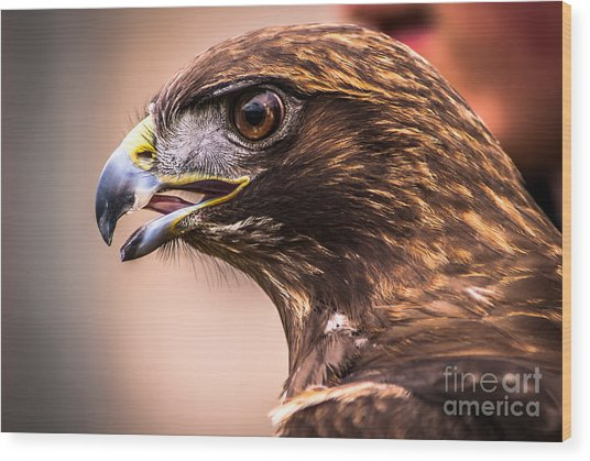 Bird Of Prey Profile Wood Print