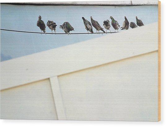 Bird On A Wire Wood Print by Jez C Self