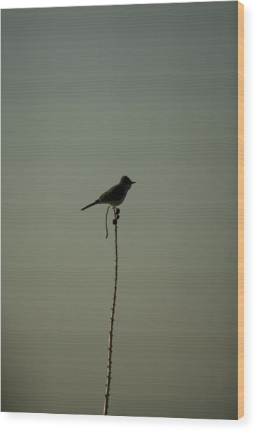 Bird On Lechuguilla Wood Print by Clyde Replogle