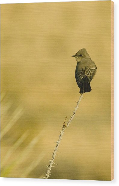 Bird On Ocotillo Wood Print by Clyde Replogle