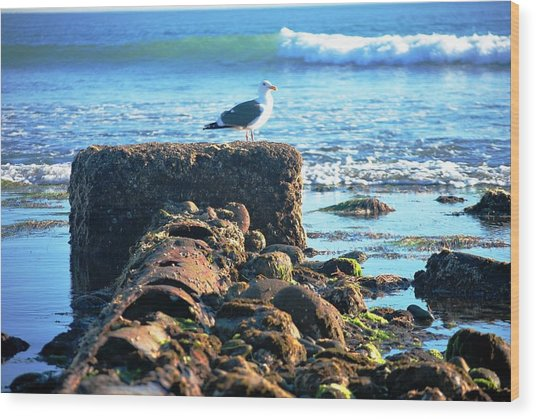 Bird On Perch At Beach Wood Print