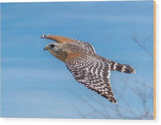Bird Or Plane Wood Print