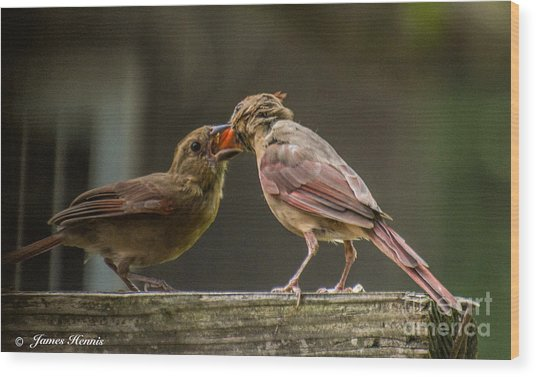 Bird Parenting Wood Print