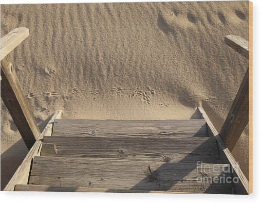 Bird Prints In The Sand Wood Print by Bryan Attewell