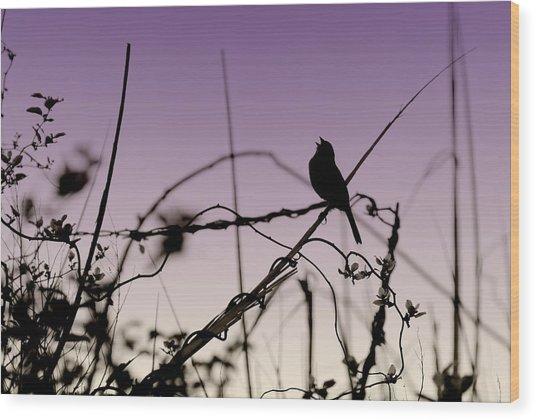Bird Sings Wood Print by Angie Tirado