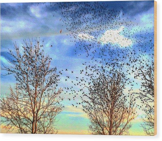 Bird Swarms Versus Hawks On The Prairie Wood Print