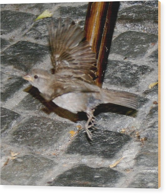 Bird Taking Flight Wood Print by Sara Summers