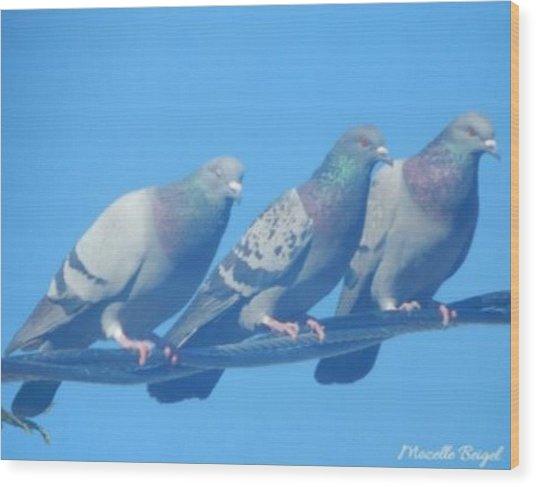 Bird Trio Wood Print