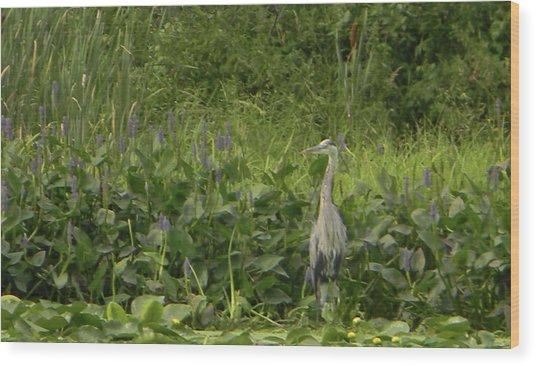 Bird Waiting Wood Print