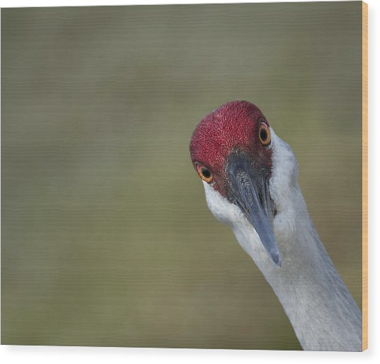 Bird Watching Wood Print