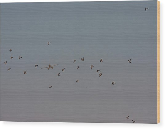 Birds And Airplane Wood Print