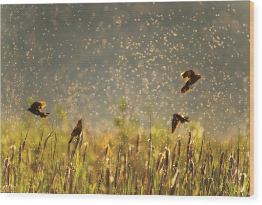 Wood Print featuring the photograph Birds And Bugs by Leland D Howard