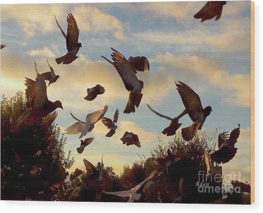 Birds And Fun At Butler Park Austin - Birds 1 Wood Print