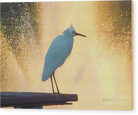 Birds And Fun At Butler Park Austin - Birds 3 Detail Macro Wood Print