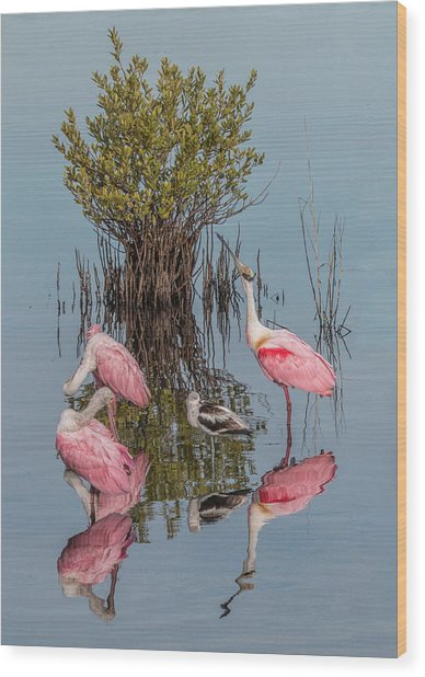 Birds And Mangrove Bush Wood Print