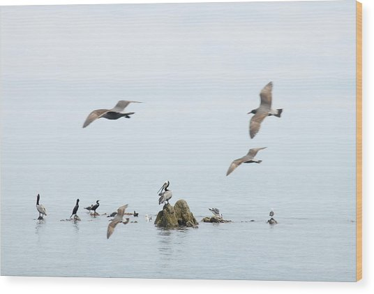 Birds Wood Print by Elisa Locci