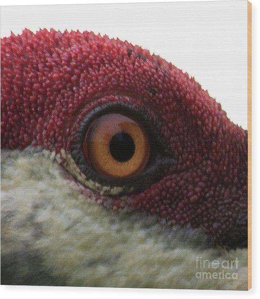 Birds Eye Wood Print