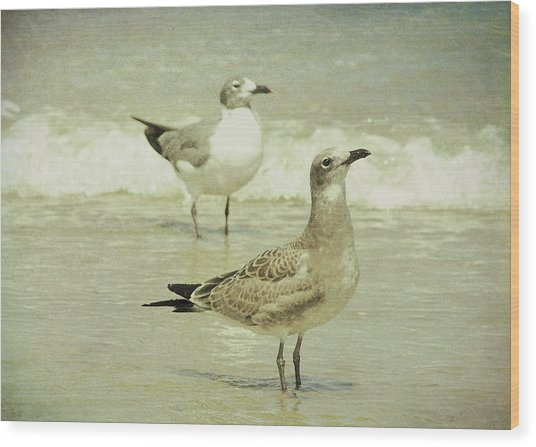 Seabirds View Wood Print by JAMART Photography