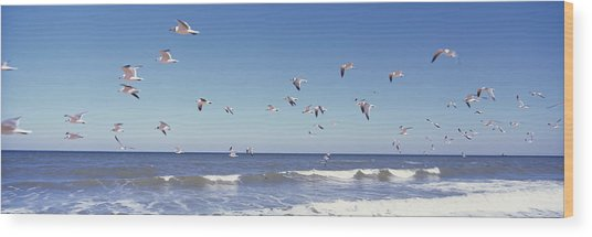 Birds Flying Over The Sea, Flagler Wood Print