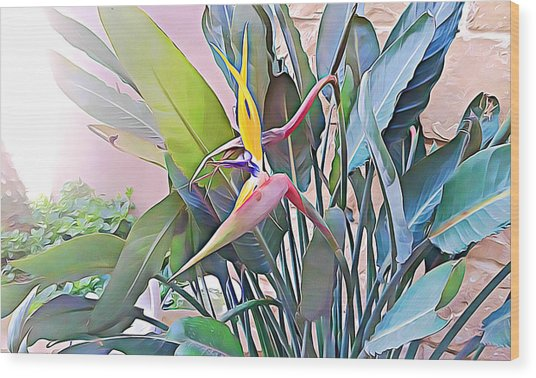 Birds Of Paradise  Wood Print