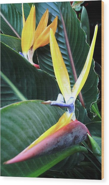 Birds Of Paradise With Leaves Wood Print