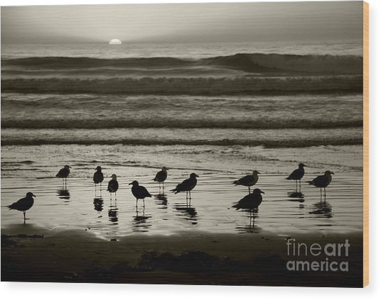 Birds On A Beach Wood Print