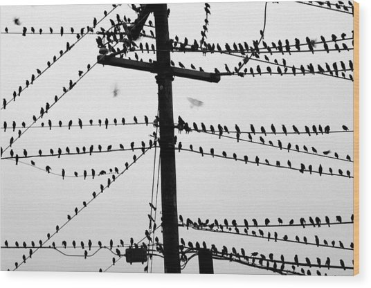 Birds On A Wire Wood Print by Don Prioleau