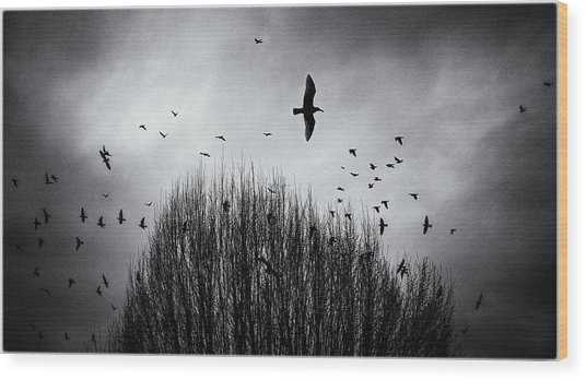 Birds Over Bush Wood Print