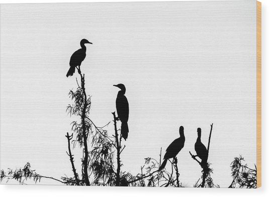 Birds Perched On Branches Wood Print