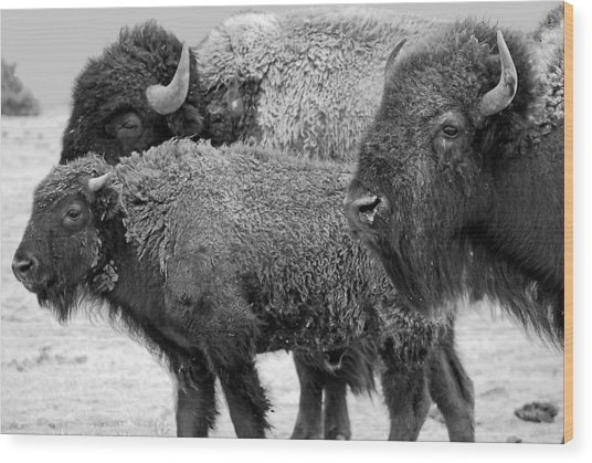 Bison - Way Out West Wood Print