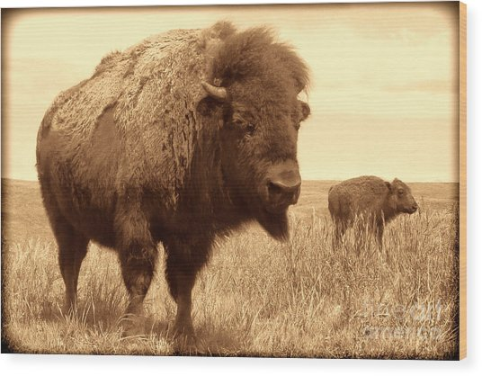 Bison And Calf Wood Print
